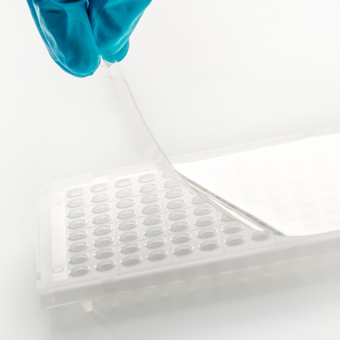 Picture of a qPCR optical seals placed on a plate